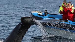Wildlife Experiences-Húsavík-Whale Watching & Puffin Island Tour in Húsavík-5