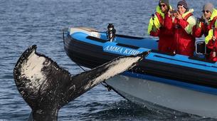 Wildlife Experiences-Húsavík-Whale Watching & Puffin Island Tour in Húsavík-1