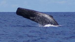 Experiences Wildlife-Chutes de Tamarin - Gorges de Rivière Noire-Observation des Baleines sur la Côte Ouest de Maurice-5