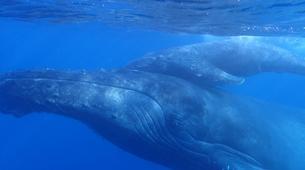 Snorkeling-Lagon de Saint-Gilles-Nager avec les dauphins et les baleines à Saint-Gilles, La Réunion-1