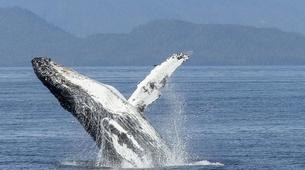 Experiences Wildlife-Chutes de Tamarin - Gorges de Rivière Noire-Observation des Baleines sur la Côte Ouest de Maurice-1