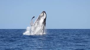 Experiences Wildlife-Chutes de Tamarin - Gorges de Rivière Noire-Observation des Baleines et Snorkeling avec les Dauphins à Maurice-5
