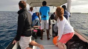 Experiences Wildlife-Chutes de Tamarin - Gorges de Rivière Noire-Observation des Baleines sur la Côte Ouest de Maurice-2