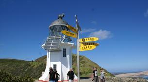 Sandboarding-Paihia-Sandboarding & Off-Road tour in Cape Reinga-5