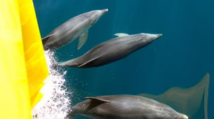 Wildlife Experiences-Paihia-Dolphin Nature Cruise + Snorkel in the Bay of Islands-2