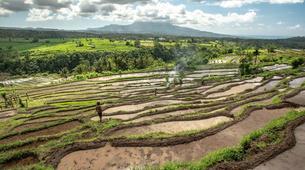Hiking / Trekking-Ubud-Ancient Aga Trek to Tenganan-6