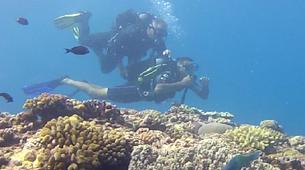 Plongée sous-marine-Lagon de Saint-Gilles-Baptême de Plongée à Saint-Gilles, La Réunion-4