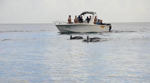 Experiences Wildlife-Chutes de Tamarin - Gorges de Rivière Noire-Observation des Baleines sur la Côte Ouest de Maurice-4