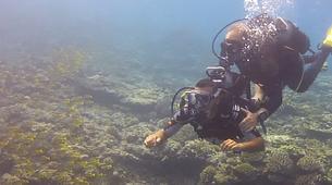 Plongée sous-marine-Lagon de Saint-Gilles-Baptême de Plongée à Saint-Gilles, La Réunion-1