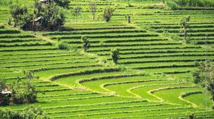 Hiking / Trekking-Ubud-Ancient Aga Trek to Tenganan-5