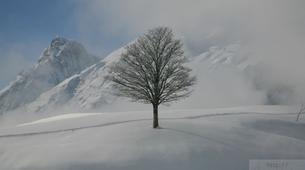 Randonnée / Trekking-Val d'Arly-Randonnée Photographie en Haute-Savoie-10