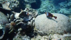 Scuba Diving-Kefalonia-Recreational dives in Kefalonia-2