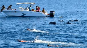 Experiences Wildlife-Chutes de Tamarin - Gorges de Rivière Noire-Observation des Baleines et Snorkeling avec les Dauphins à Maurice-3