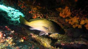 Scuba Diving-Kefalonia-Recreational dives in Kefalonia-5