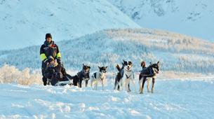 Chiens de traîneau-Tromsø-Dog sledding afternoon excursion in Tromsø-5