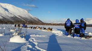 Chiens de traîneau-Tromsø-Dog sledding afternoon excursion in Tromsø-4