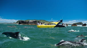 Wildlife Experiences-Paihia-Dolphin Nature Cruise + Snorkel in the Bay of Islands-1