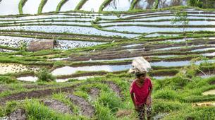 Hiking / Trekking-Ubud-Ancient Aga Trek to Tenganan-2