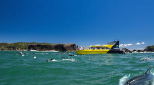 Wildlife Experiences-Paihia-Dolphin Nature Cruise + Snorkel in the Bay of Islands-4