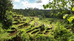 Hiking / Trekking-Ubud-Ancient Aga Trek to Tenganan-1