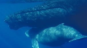 Snorkeling-Lagon de Saint-Gilles-Nager avec les dauphins et les baleines à Saint-Gilles, La Réunion-4