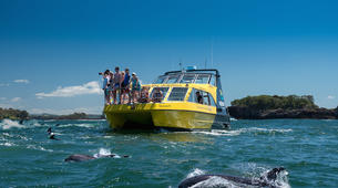 Wildlife Experiences-Paihia-Dolphin Nature Cruise + Snorkel in the Bay of Islands-6