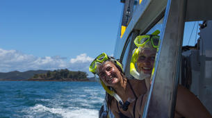 Wildlife Experiences-Paihia-Dolphin Nature Cruise + Snorkel in the Bay of Islands-5
