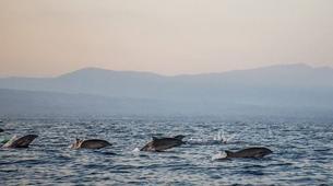 Experiences Wildlife-Singaraja-Dolphin Watching at Lovina Beach-4