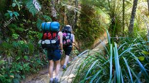 Sea Kayaking-Marahau-Multi Day Camp & Kayak Trip in Abel Tasman National Park-3