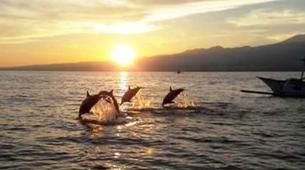 Experiences Wildlife-Singaraja-Dolphin Watching at Lovina Beach-3