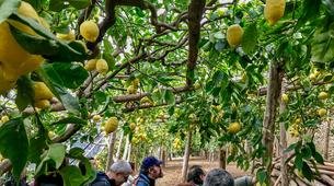 Hiking / Trekking-Amalfi Coast-Trekking on the Path of the Lemons from Ravello to Maiori, Amalfi Coast-2