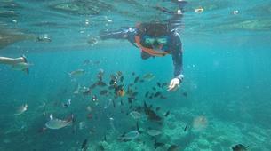 Canyoning-Cebu-Kawasan Falls & Moalboal Island Private Tour Package-13