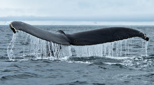 Experiences Wildlife-Svalbard-Nature and Wildlife Boat Tour in Svalbard, Norway-3