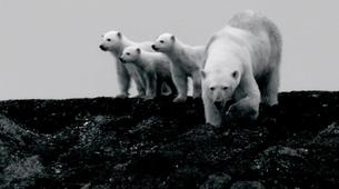Experiences Wildlife-Svalbard-Nature and Wildlife Boat Tour in Svalbard, Norway-2
