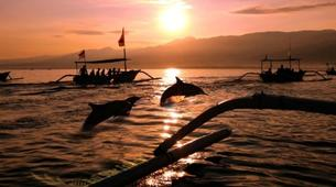 Experiences Wildlife-Singaraja-Dolphin Watching at Lovina Beach-2
