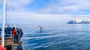 Wildlife Experiences-Dalvík-Whale Watching from Dalvík, North of Iceland-2