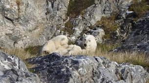 Experiences Wildlife-Svalbard-Nature and Wildlife Boat Tour in Svalbard, Norway-4