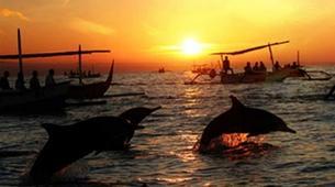 Experiences Wildlife-Singaraja-Dolphin Watching at Lovina Beach-1