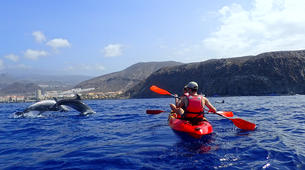 Sea Kayaking-Los Cristianos, Tenerife-Kayaking with dolphins and snorkeling with turtles in Tenerife-2
