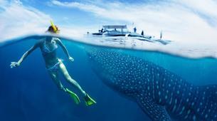 Canyoning-Cebu-Kawasan Falls & Whale Watching Private Tour Package-1