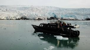 Experiences Wildlife-Svalbard-Nature and Wildlife Boat Tour in Svalbard, Norway-6