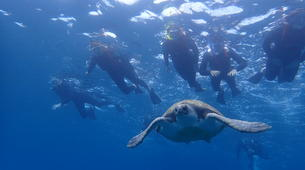 Sea Kayaking-Los Cristianos, Tenerife-Kayaking with dolphins and snorkeling with turtles in Tenerife-3