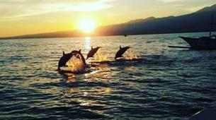 Experiences Wildlife-Singaraja-Dolphin Watching at Lovina Beach-6