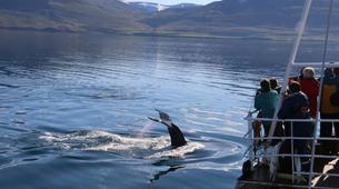 Wildlife Experiences-Dalvík-Whale Watching from Dalvík, North of Iceland-1