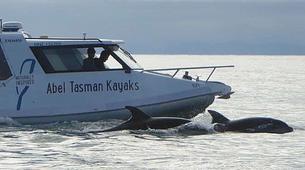 Sea Kayaking-Marahau-Wildlife Kayak Tour in Tonga Island Marine Reserve-6