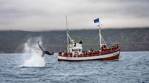 Wildlife Experiences-Dalvík-Whale Watching from Dalvík, North of Iceland-4
