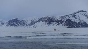 Experiences Wildlife-Svalbard-Nature and Wildlife Boat Tour in Svalbard, Norway-1