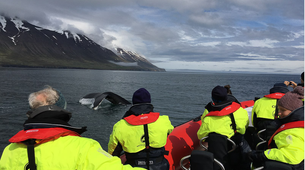 Wildlife Experiences-Dalvík-Whale & Puffin Watching from Dalvík, North of Iceland-5