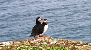 Wildlife Experiences-Dalvík-Whale & Puffin Watching from Dalvík, North of Iceland-3