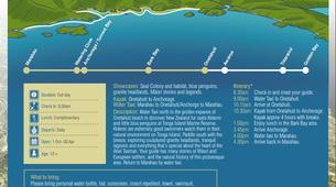 Sea Kayaking-Marahau-Wildlife Kayak Tour in Tonga Island Marine Reserve-1